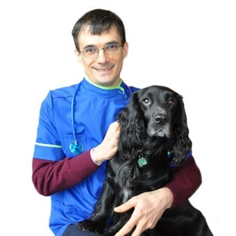 Vets In Brentford Open On Sundays Companion Care
