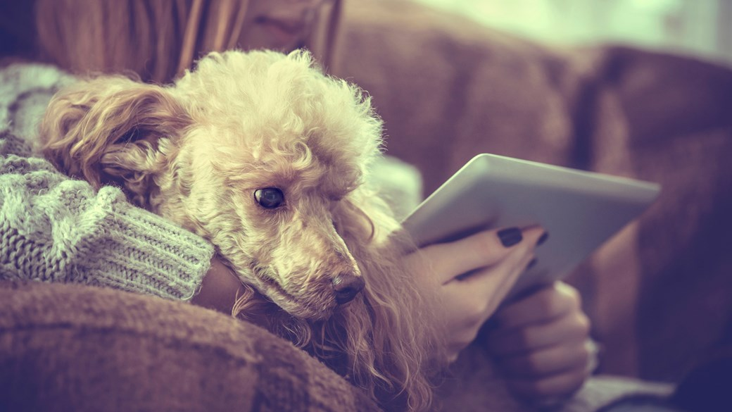 dog on girls knee with ipad in home (1)
