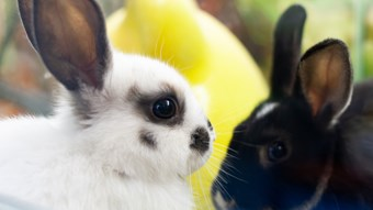 two rabbits_2
