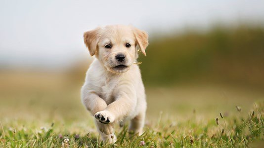 puppy running through field (1)